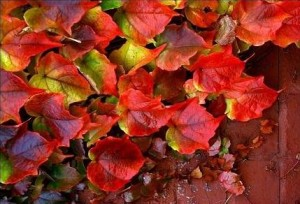 Jak liście na wietrze