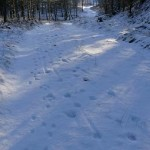 Znaki na sniegu