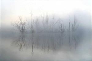 Błądzenie we mgle
