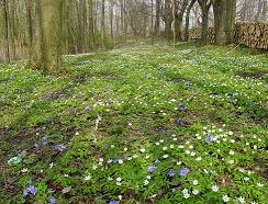 wiosna.w.lesie