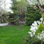 Magnolia w tajemniczym ogrodzie