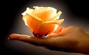 Poezja Jolanty Marii Dzienis Na Płatkach Herbacianej Róży