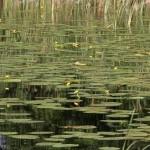 Fot. Anna Kieszkowska - Leśne jeziorko