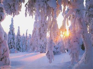 www.adonai.pl-siver-snow